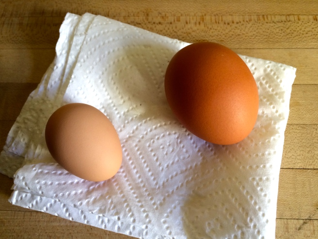 The chicks arrived in May and most began laying eggs by the end of summer. The eggs start out so cute and small, like the one on the left, and gradually increase in size as the chickens mature.