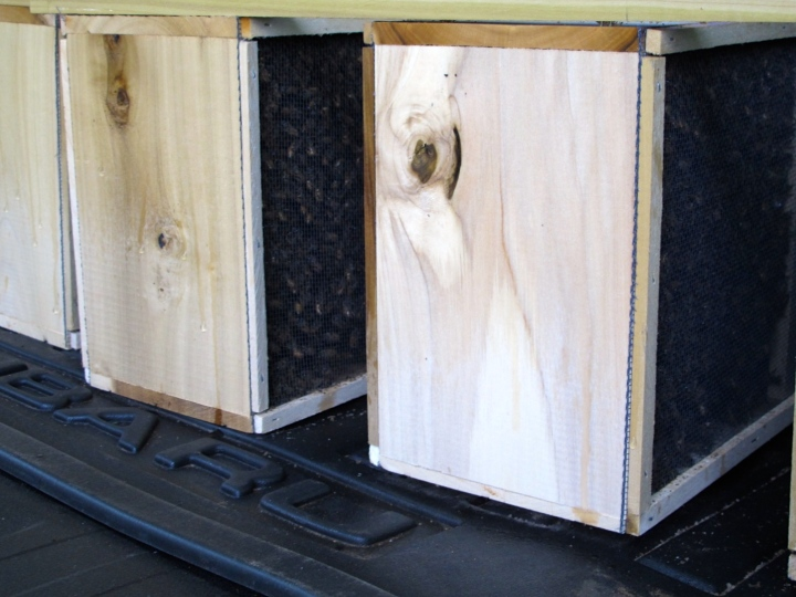 Bees arrive in screened wooden boxes to the local beekeeping supply store for customer pickup. You bring them home, praying the whole way none escape!