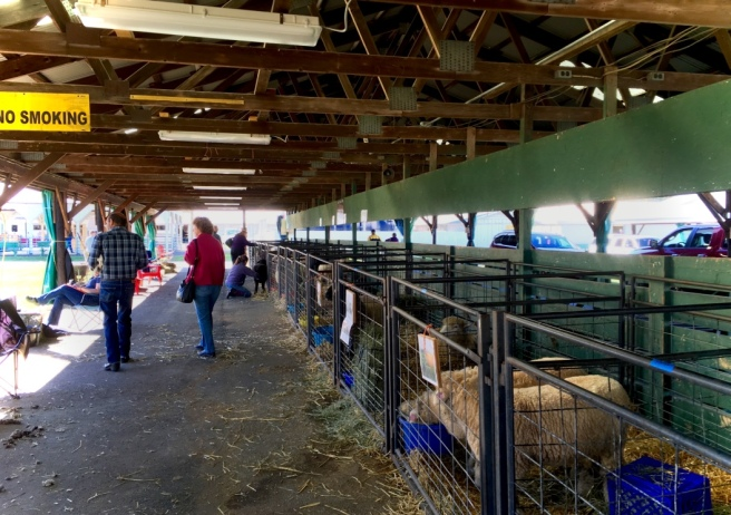 Visiting one of the barns at the 2016 Southern Adirondack Fiber Festival