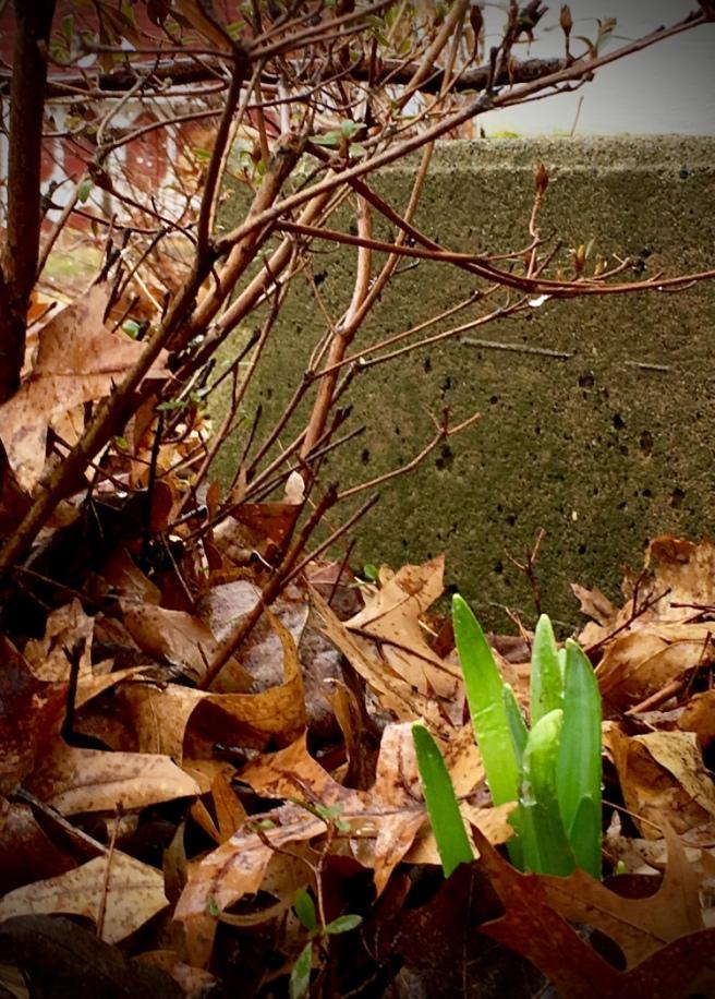 thinking spring