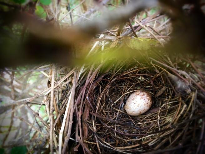 cardinal egg