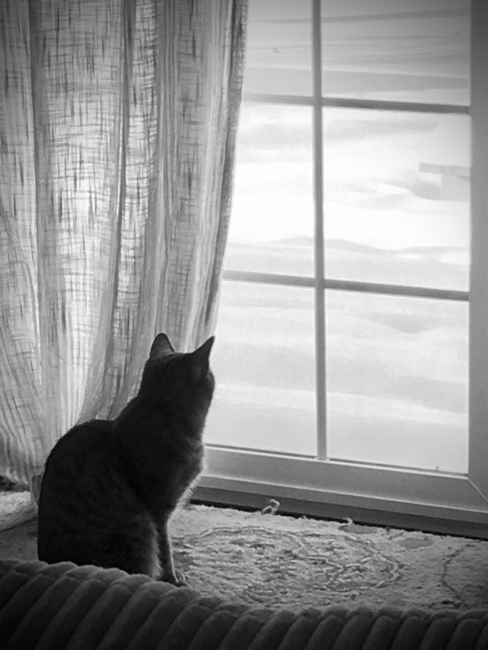 louis birdwatching – Version 2